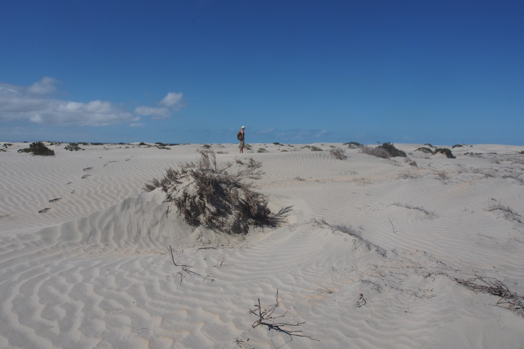 Wüste, überall Wüste