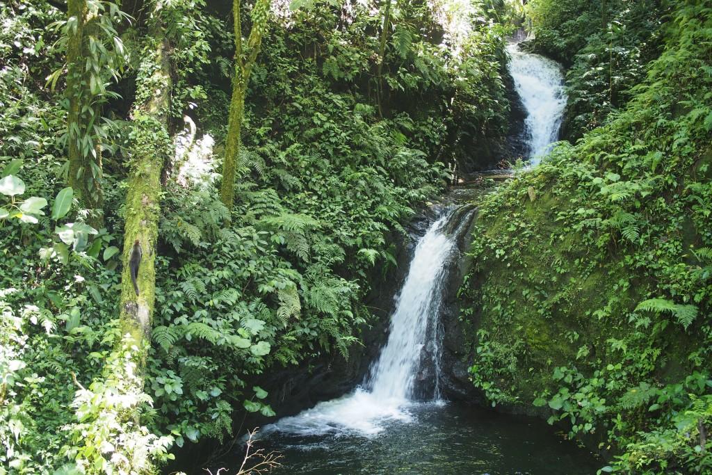 Regenwald mit Wasserfällen. Links im Bild versteckt: Ein Nasenbär.